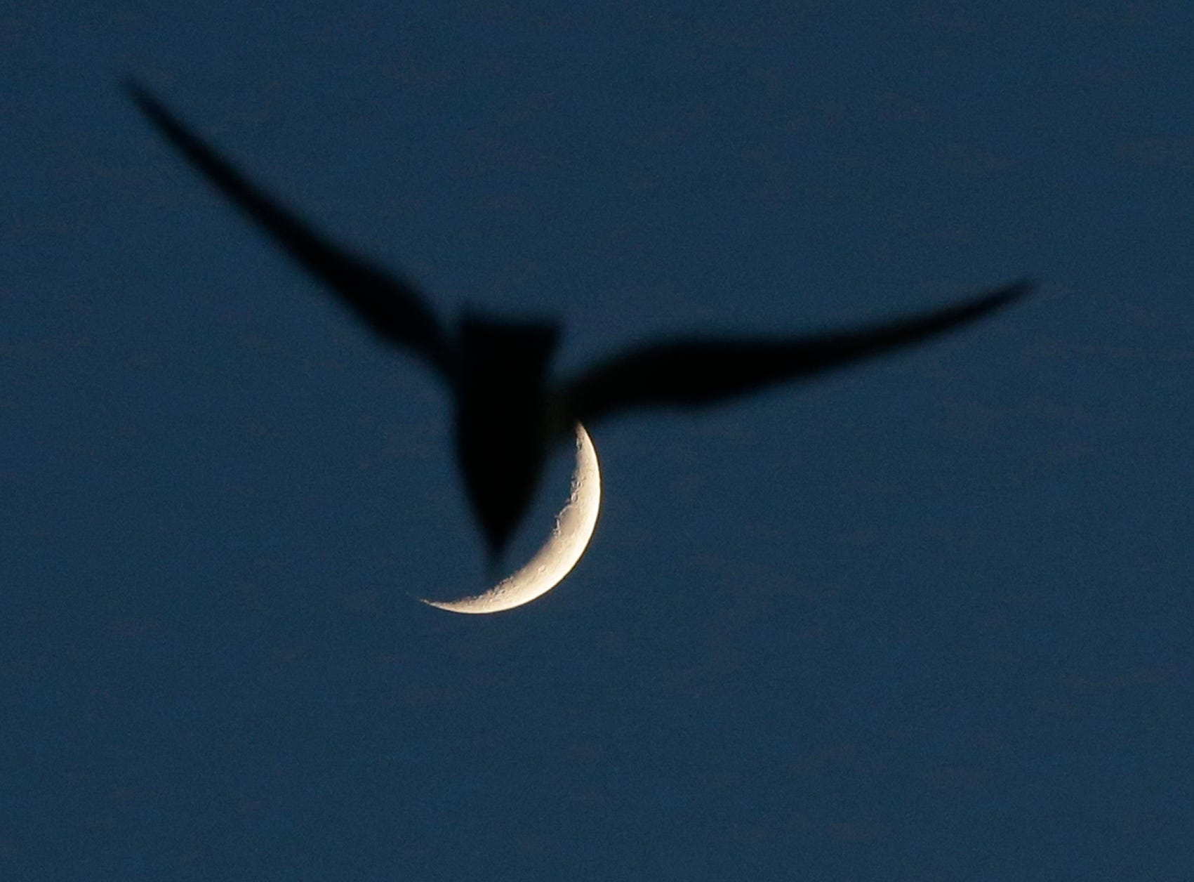 A gull files past the moon over Lakeshore State Park in Milwaukee on May 28, 2017.