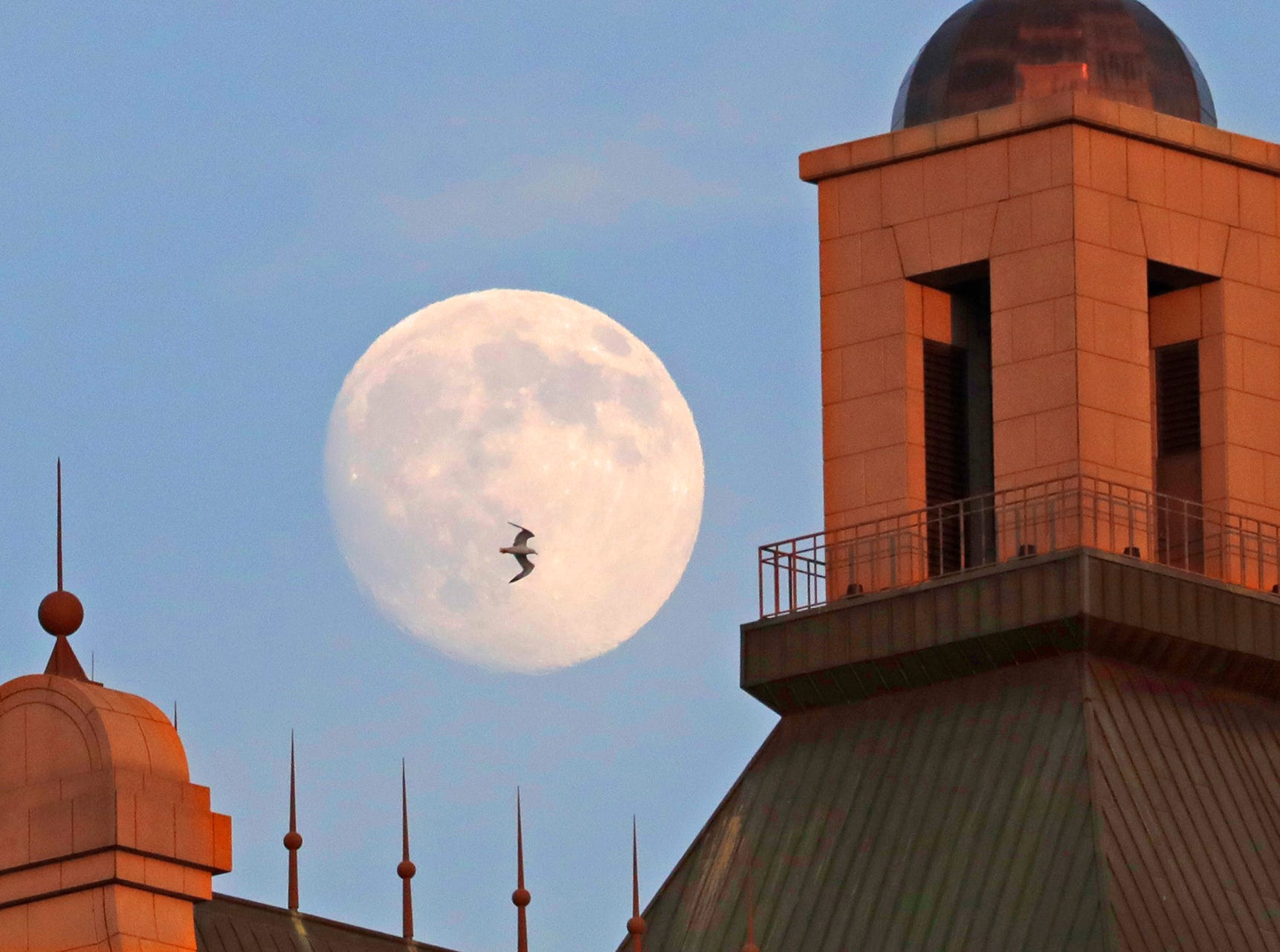 "A gull flies past a nearly full moon rising above the 35-floor 100 East Wisconsin building in Milwaukee  July 17, 2016. The moon was completely full on July 19, 2016. According to the Old Farmers Almanac, the full moon on the 19th is referred to as the ""Full Buck Moon"" as bucks begin to grow antlers at this time. This full moon was also known as the thunder moon, because thunderstorms are so frequent during this month."