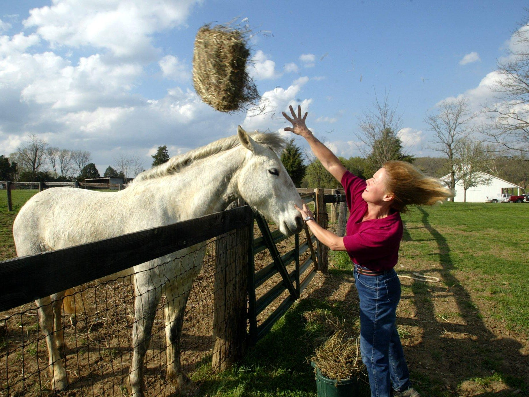 Linda Kelly throws some alfafa hay out into the pasture as Edison, a mustang adopted by Currey Ingram Academy, comes up to greet her in 2003.