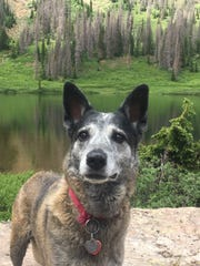 Roxy died in a snare in November near Santa Cruz Lake.