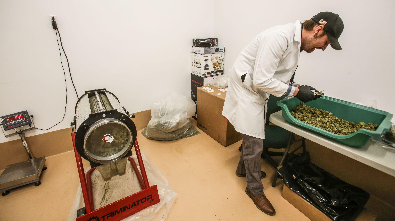 Weed farmers use machine technology as marijuana business grows