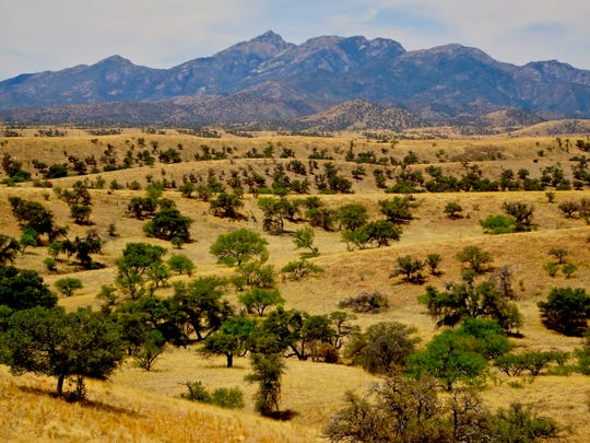 The high grasslands and rolling plains surrounding Sonoita and Elgin is where Arizona's wine industry began.