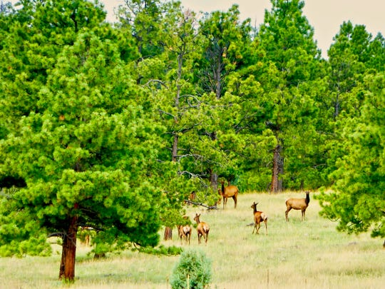 Elk, deer and other wildlife are regular visitors to the mountain hamlet of Greer.