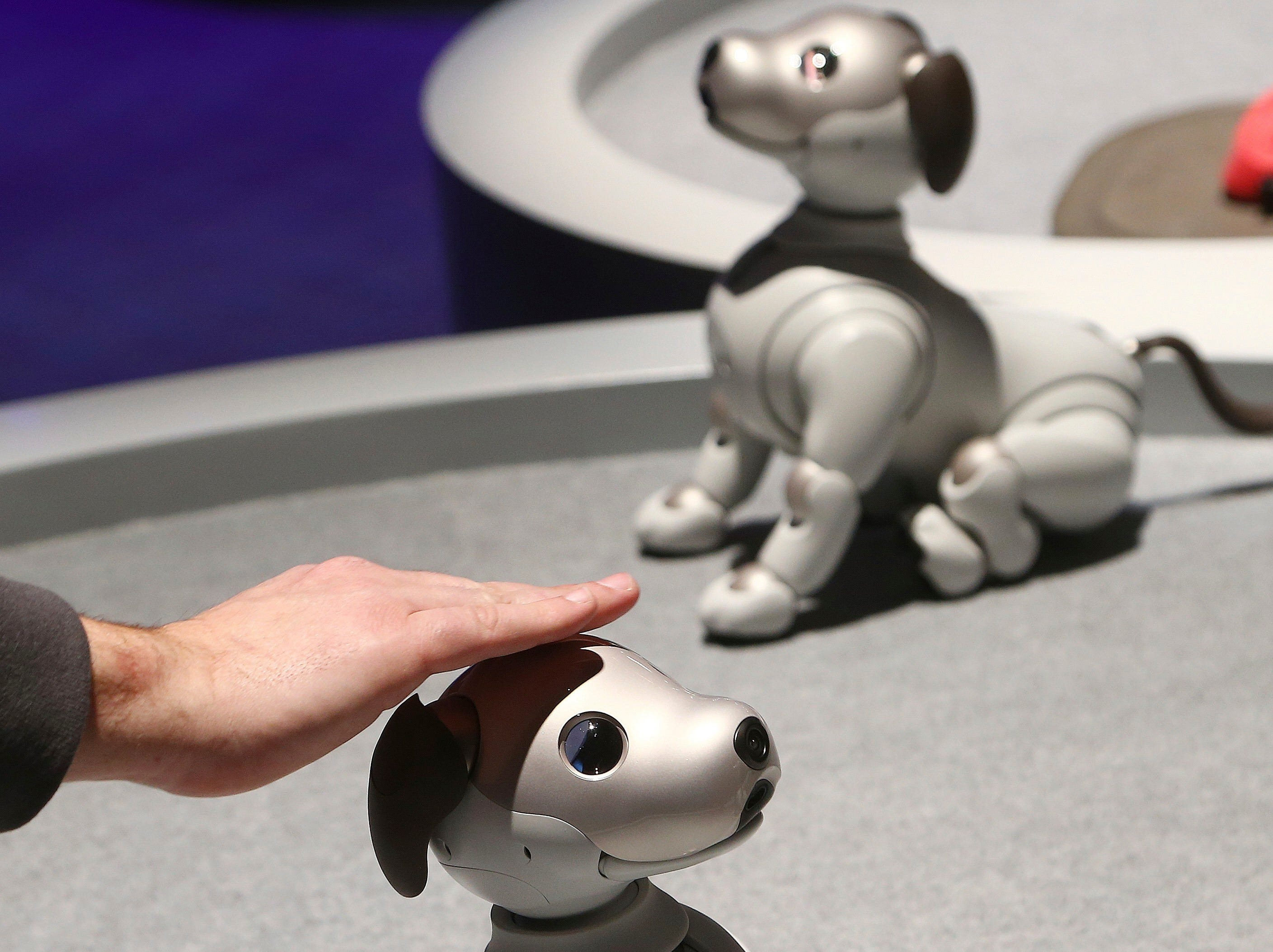 The new edition Sony Aibo robot dog incorporates a series of sensors, cameras, and actuators to activate the pup and keep it interactive, as seen inside the Sony display area at CES International on Monday, Jan. 7, 2019, in Las Vegas.