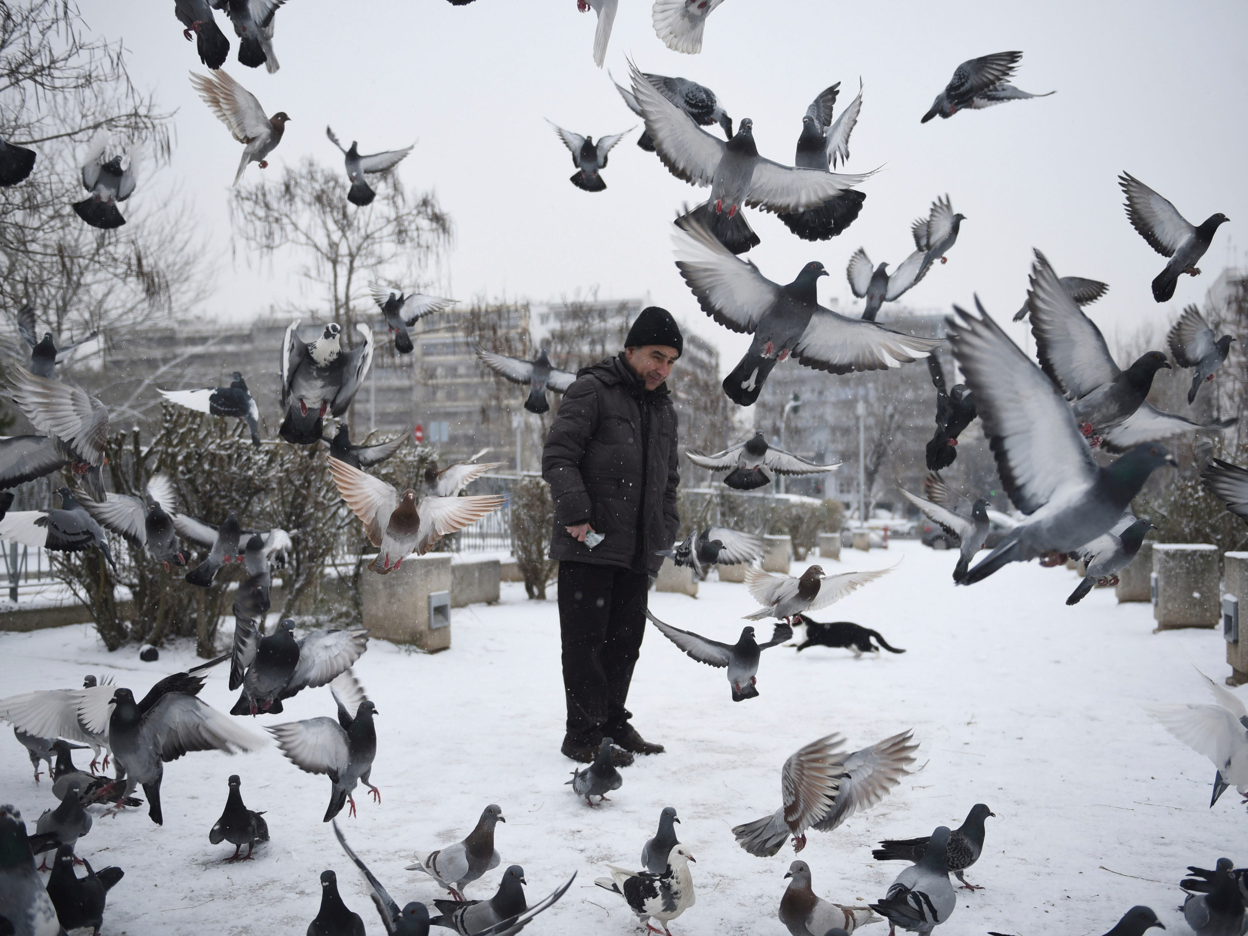 Pigeons fly in front of a man after a snowfall at the northern port city of Thessaloniki, Greece,   Jan 9. 2019.