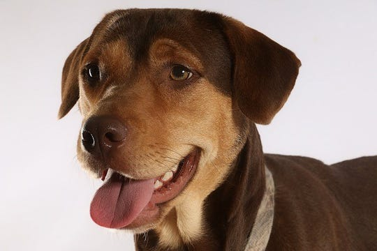 """Shelby makes her acting debut in """"A Dog's Way Home."""""""