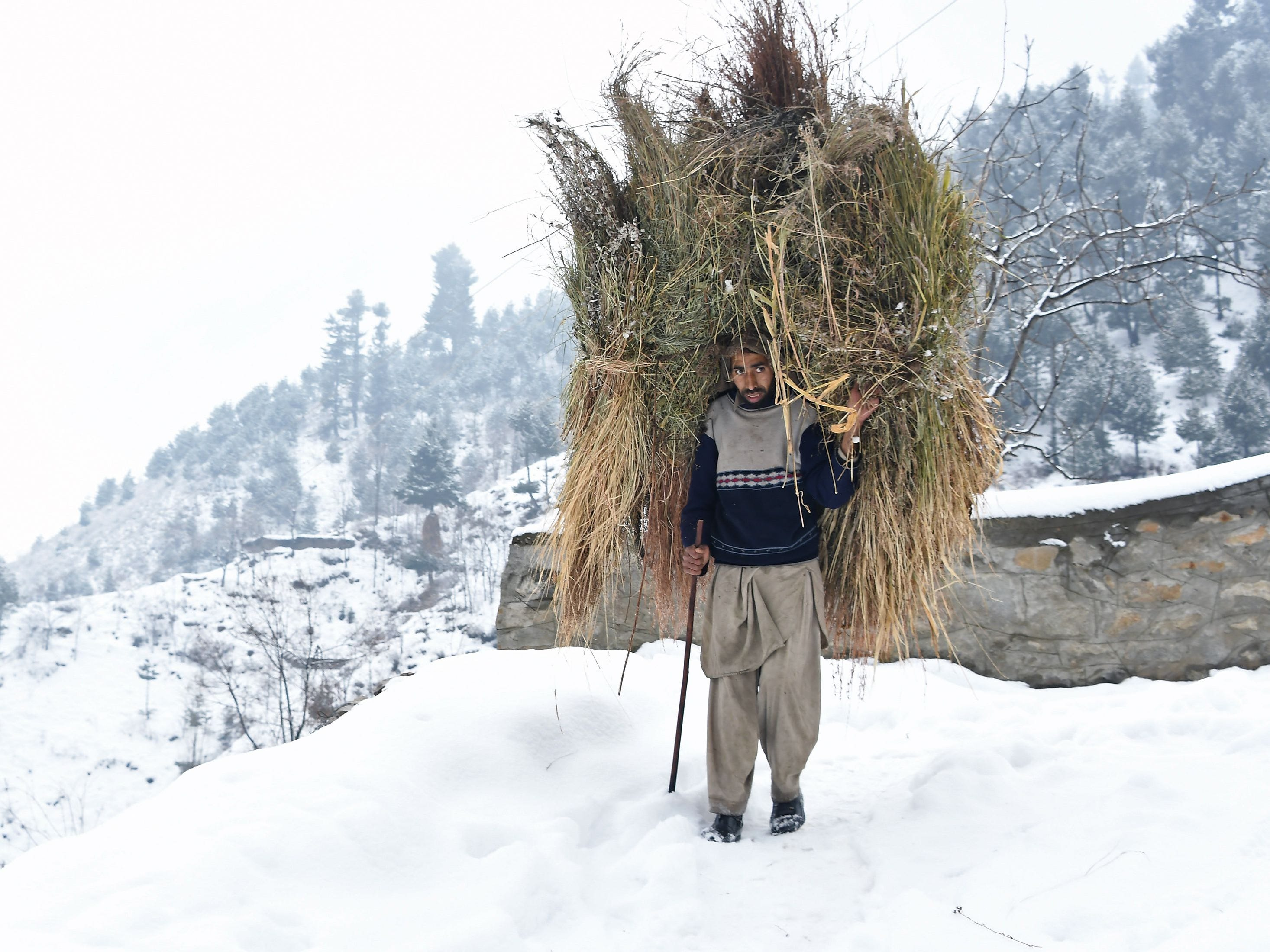 An Indian Kashmiri man carries feed for cattle through the snow on the outskirts of Srinagar,  Jan 9. 2019.