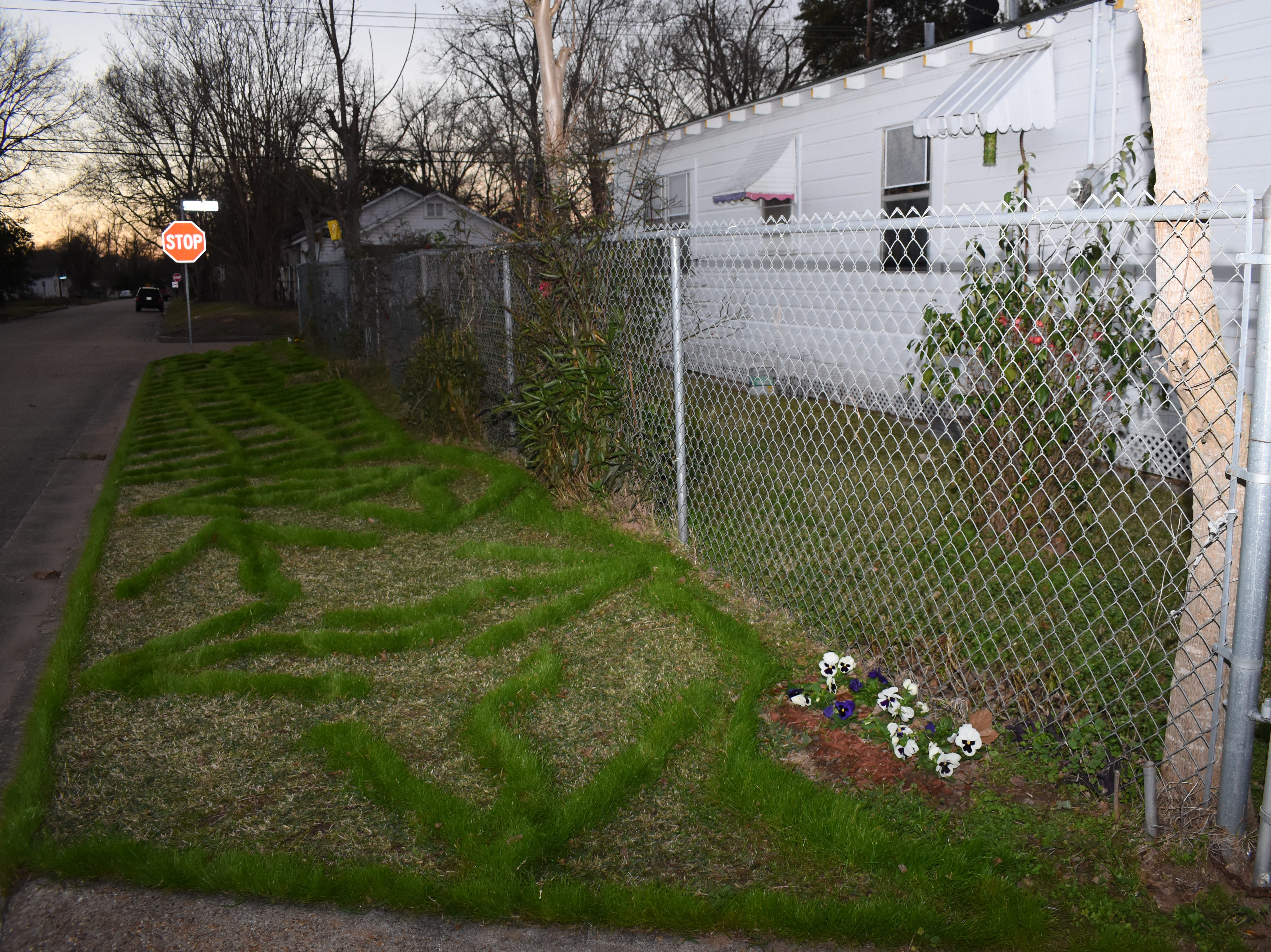 "For over 20 years, Arthur Brown has used a lawn trimmer to create designs in his yard located at University and 5th Streets in Alexandria. Brown creates a new design for the beginning of each new year. For 2019, he trimmed out the word ""Red Hots"" along with big dots because as a child, he loved to eat the candy. Neighbors and passersby like his designs and look forward each  to see what new patterns will emerge in his yard. He uses ryegrass because it is a winter grass that will last until May. Brown plans the designs a year in advance and is already working on 2020. 