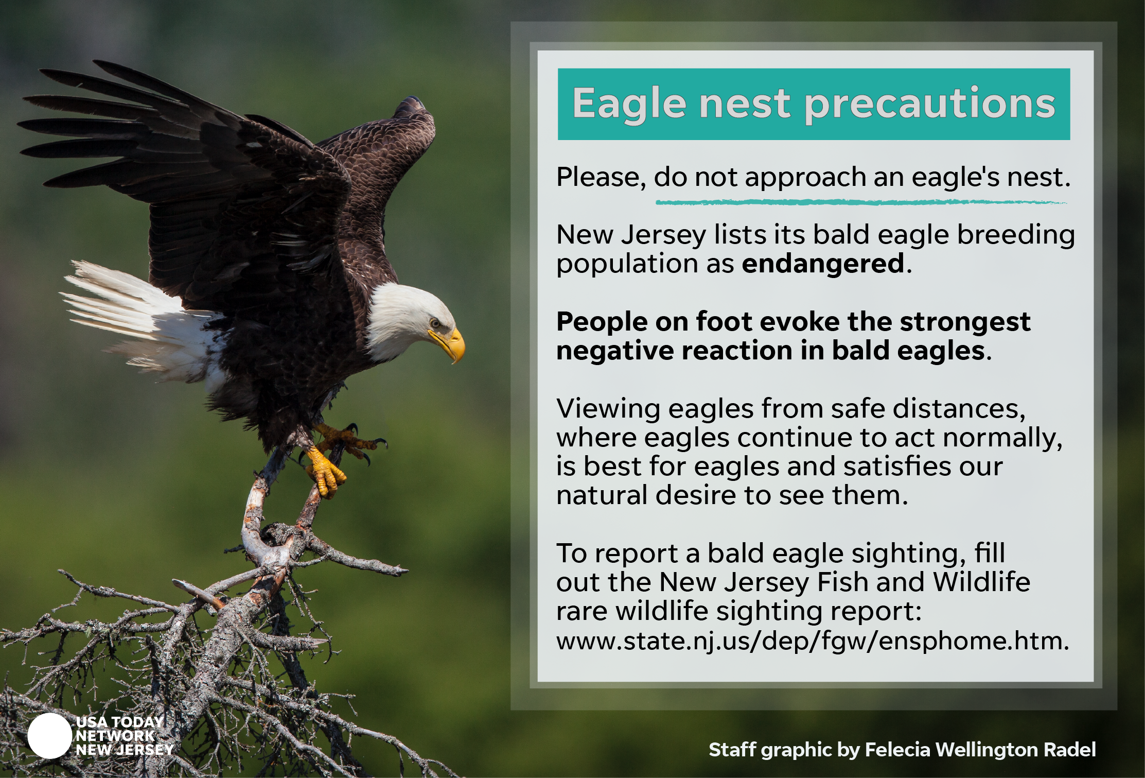 Bald Eagle Stus Advocate For Birds Besieged By Development