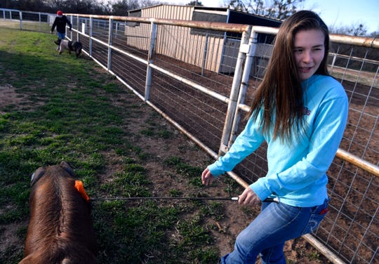 Cooper High senior Jaycee Ritchie walks a Duroc pig named Red on Tuesday at the Abilene ISD agriculture barn. In the background, her brother Klayton walks his own swine, both will be showing pigs during the Abilene High/Cooper High Livestock Show Saturday.