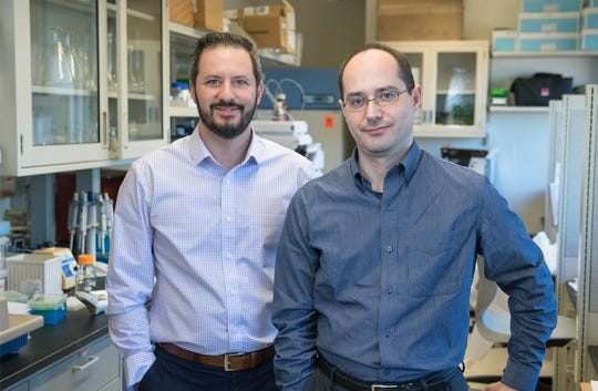 Study authors Luigi Brunetti (left) and Leonid Kagan at the Rutgers Ernest Mario School of Pharmacy found that measuring the enzyme in blood plasma that causes blood to clot provides a more accurate assessment of bleeding risk with blood thinners in obese patients.