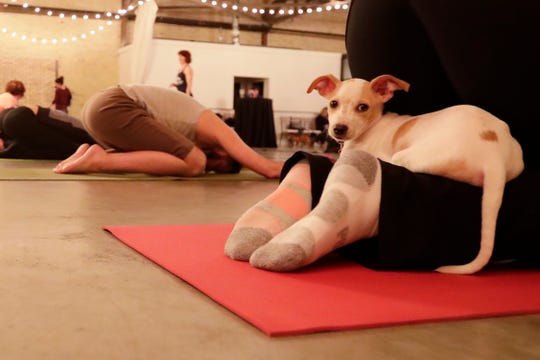 Yoga With Puppies at Gather on Broadway on Wednesday in downtown Green Bay.