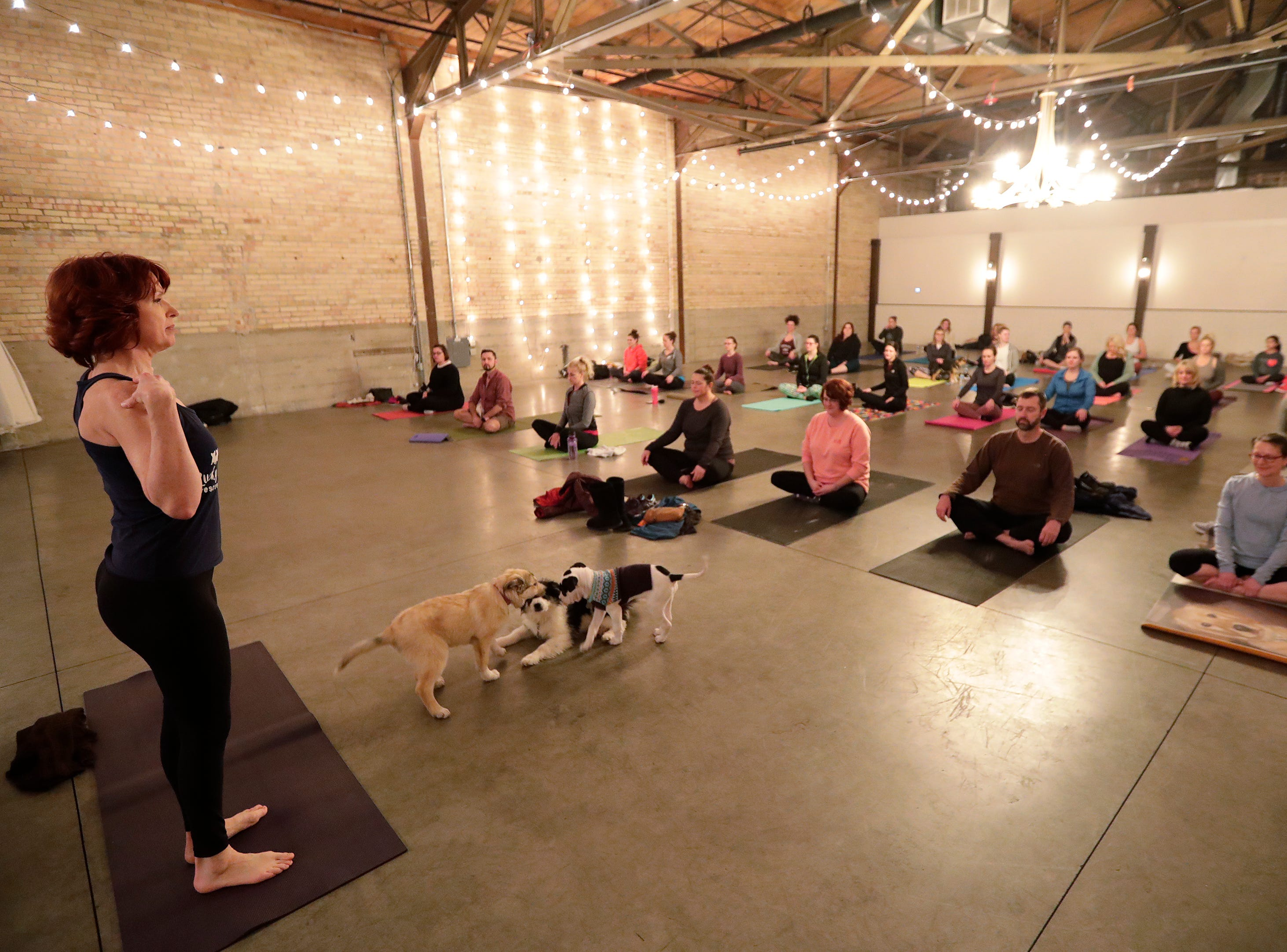 Puppies from Lucky 7 Dog Rescue play during a Yoga With Puppies class at Gather on Broadway on Wednesday, January 9, 2019 in Green Bay, Wis.