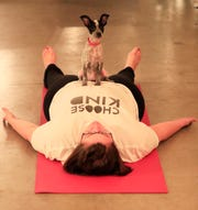 A puppy from Lucky 7 Dog Rescue sits with a participant of a Yoga With Puppies class Wednesday at Gather on Broadway in downtown Green Bay.