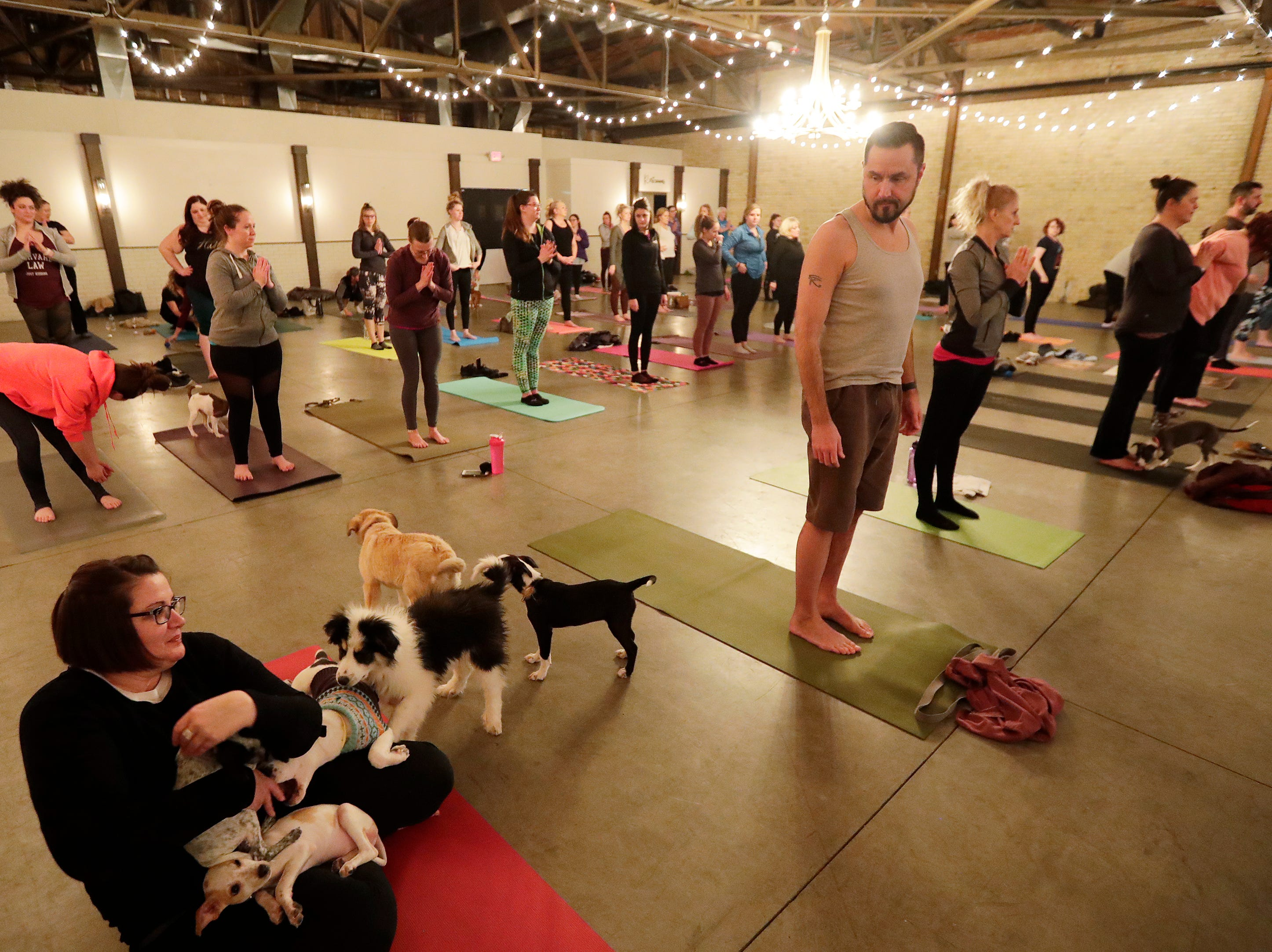 Puppies from Lucky 7 Dog Rescue run around and play during a Yoga With Puppies class at Gather on Broadway on Wednesday, January 9, 2019 in Green Bay, Wis.