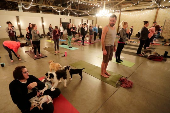 Puppies from Lucky 7 Dog Rescue run around and play Wednesday during a Yoga With Puppies class at Gather on Broadway in downtown Green Bay.