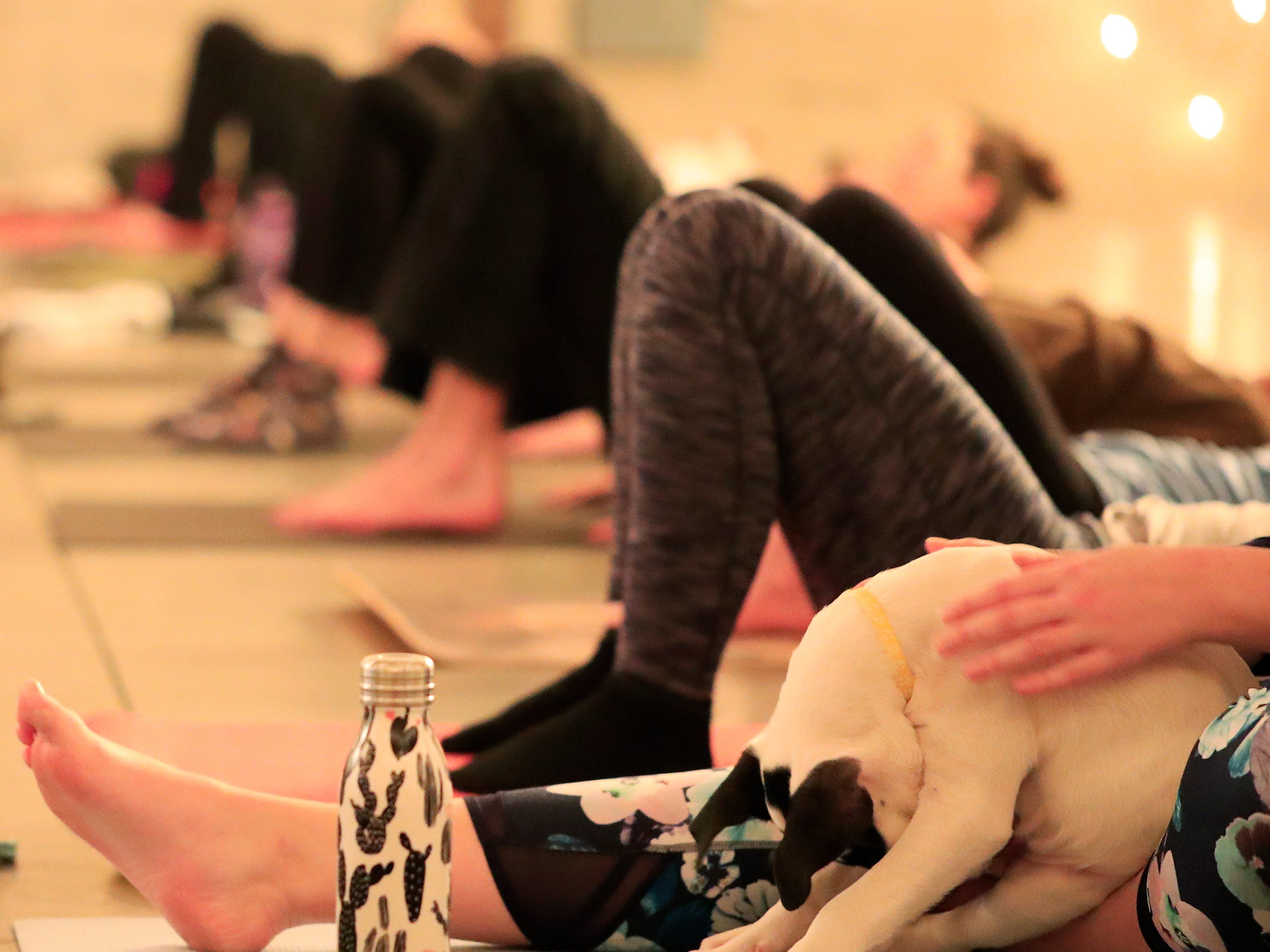 A puppy from Lucky 7 Dog Rescue sits with a participant of a Yoga With Puppies class at Gather on Broadway on Wednesday, January 9, 2019 in Green Bay, Wis.