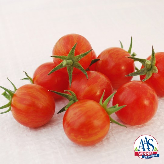 This new cherry tomato variety combines yellow and red in its fruit.