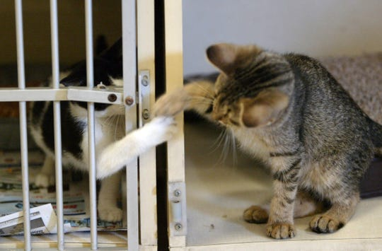 Lafayette Animal Shelter & Care Center holds Second Chance Saturday from 1 p.m. to 4 p.m. for visitors to meet adoptable pets.
