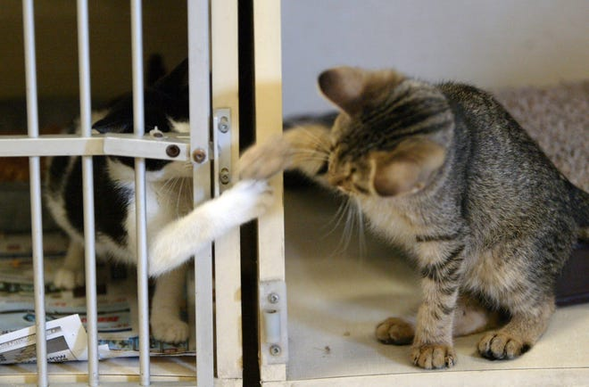 Lafayette Animal Shelter & Care Center holds Second Chance Saturday from 1 p.m. to 4 p.m. for visitors to meet adoptable pets. Jan. 10, 2019.