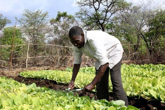 Farmer Jones Nkhoma, 76, tends to crops on an irrigated field in Tapile Village, Zambia.