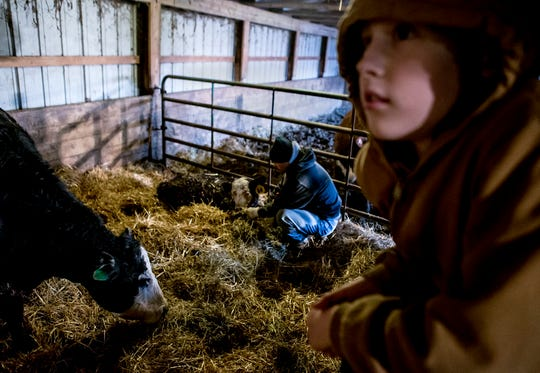 Bryce hangs out in the cow barn as his father bottle feeds a sick calf. This calf is slowly getting stronger and eating more as the days go by.
