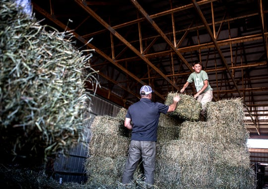 Arthur helps his dad, Andy load hay onto a customer's truck.