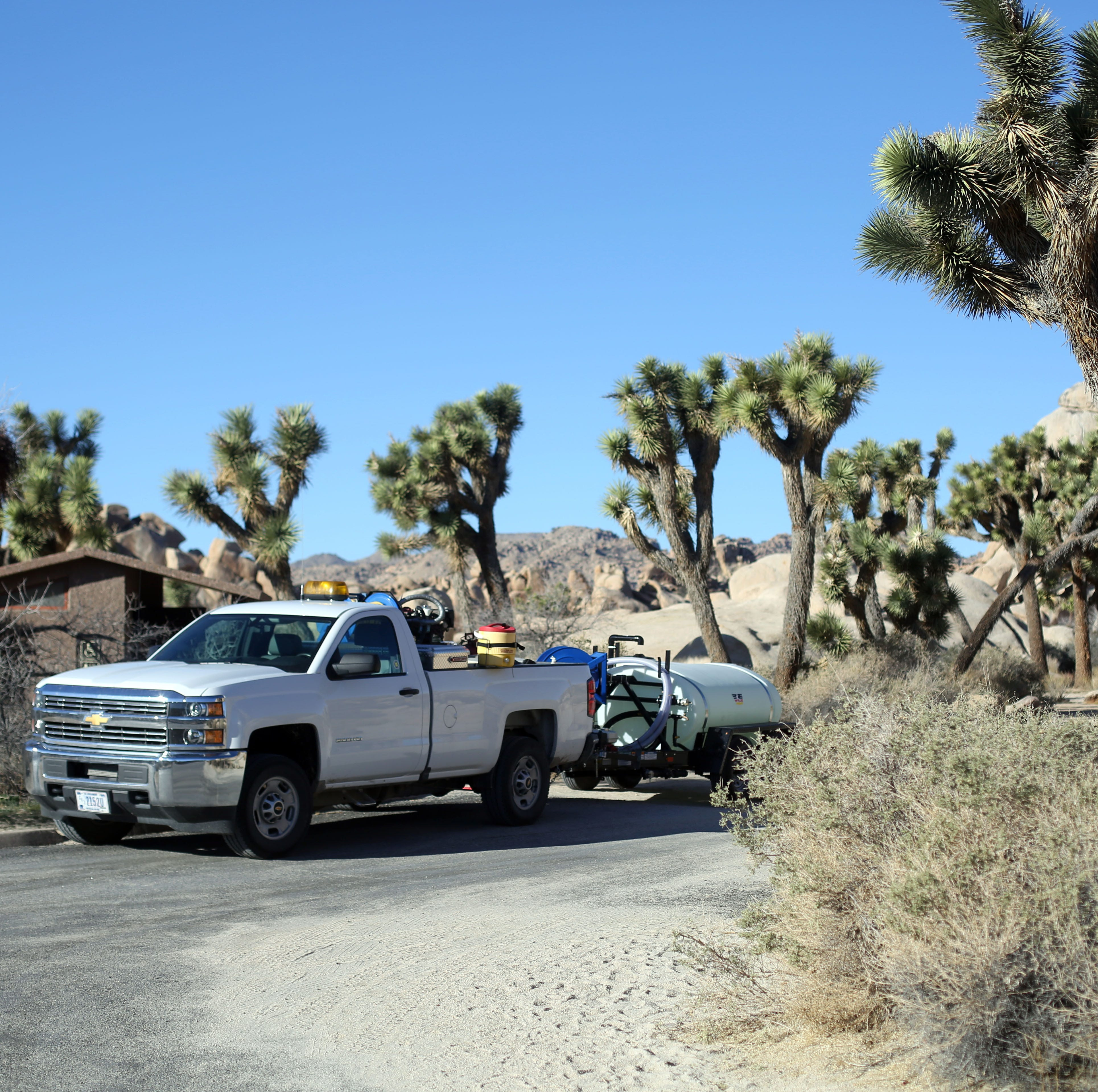 Government shutdown no excuse for outlandish Joshua Tree National Park vandalism
