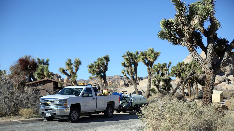 Shutdown No Excuse For Outlandish Joshua Tree National Park Vandalism