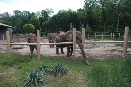 Part of the elephant habitat at Seneca Park Zoo.