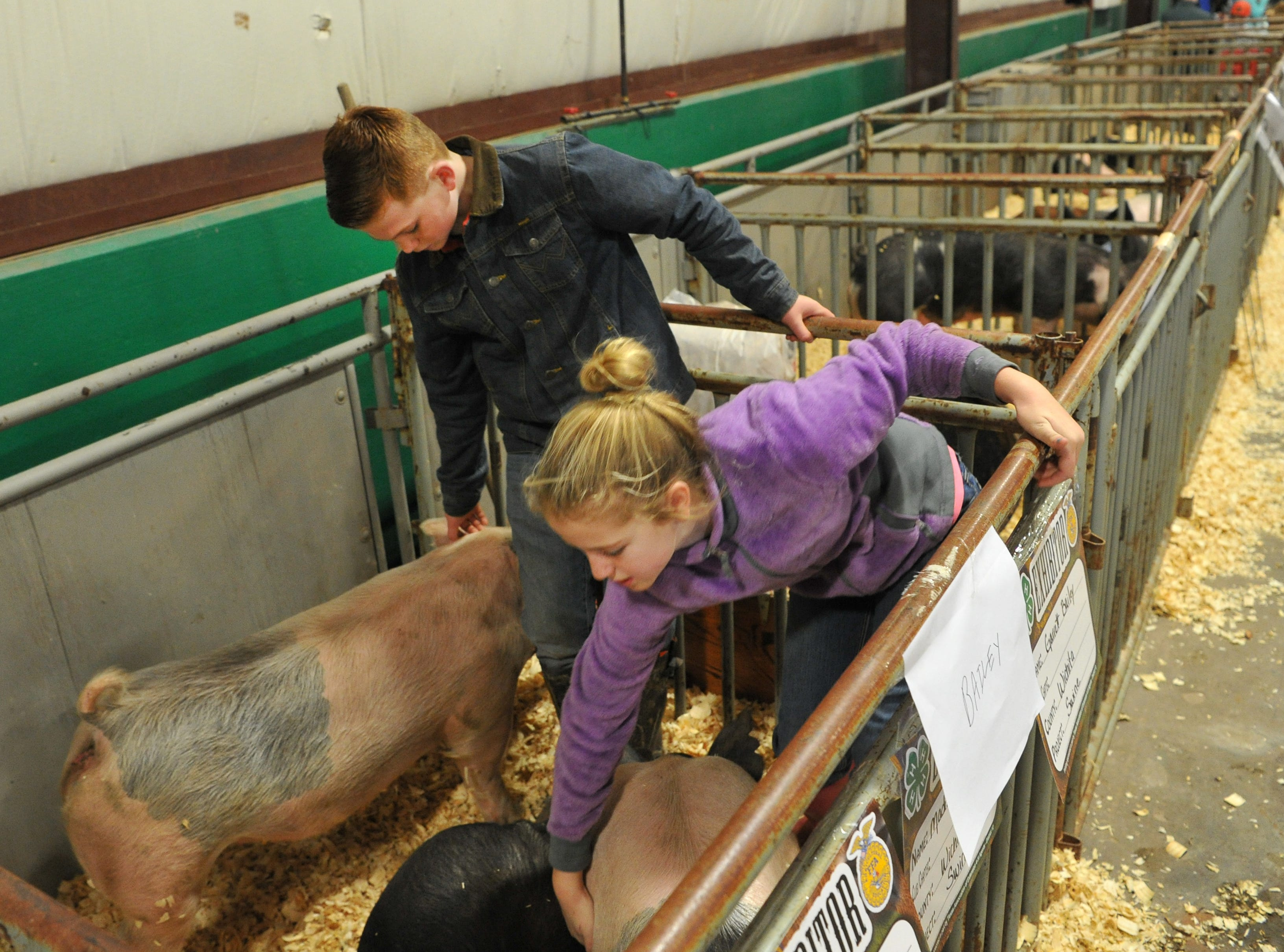 Garrett, left, and Cameron Bailey prepare their swine for show during the Wichita County Junior Livestock Show.
