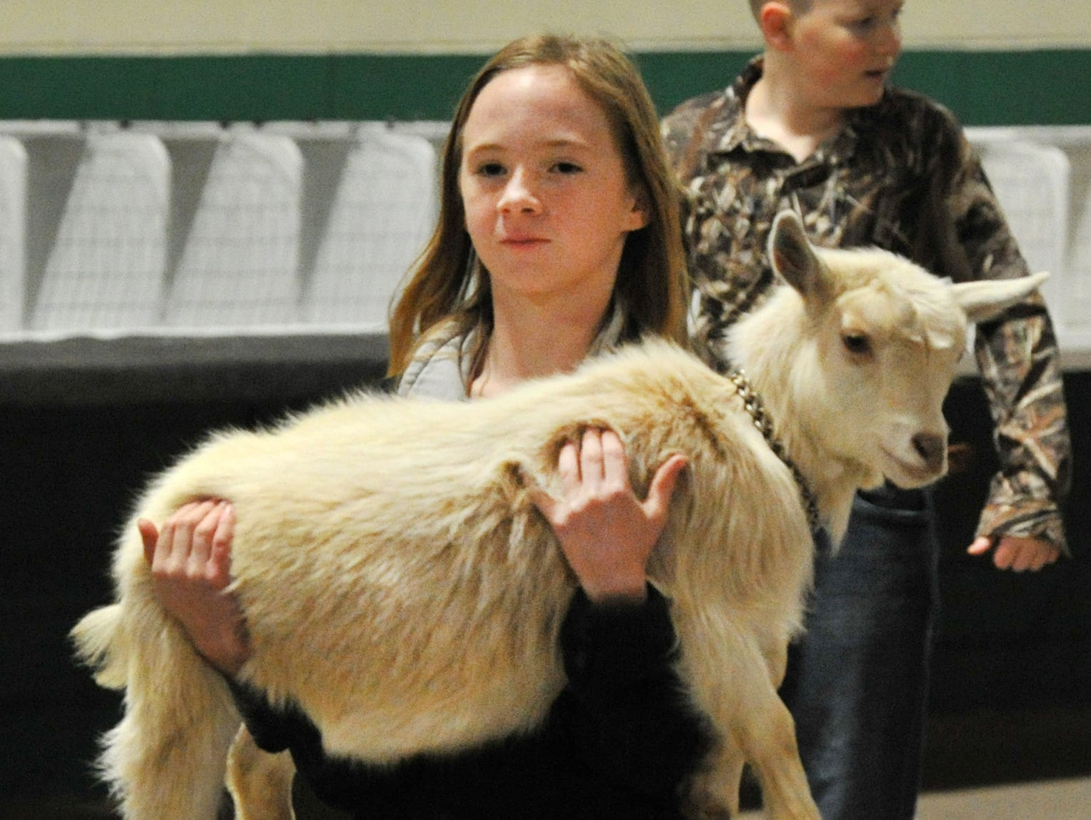 Alaina Little carries Ivanka the goat to her pin, Thursday morning, for the Wichita County Junior Livestock Show.