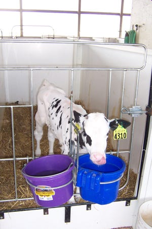 Keeping calves healthy so they may be productive members of the herd is one way dairy producers are striving to generate profit on the farm.