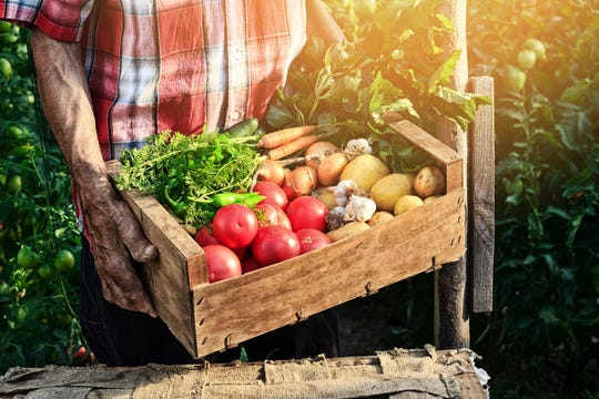 Be sure to check if the vegetables you want to plant are cool- or warm-season ones.