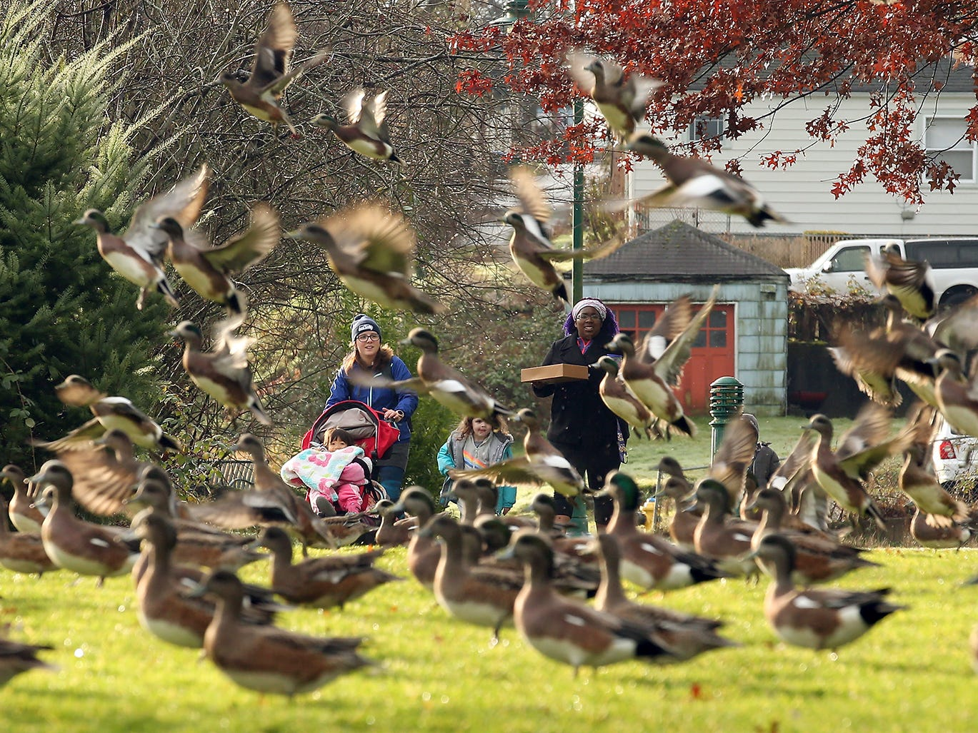 Kate Calixterio (left) with her kids Kora, 3, and Remi, 1, in the stroller are delighted as a large flock of wigeons take flight ahead of them as they walk along the path with Rylee Schaffer 4, (center) and Shalynn Pugh with son Jaden, 4, at Evergreen Rotary Park in Bremerton on Friday, January 11, 2019. Calixterio and Pugh are part of No Excuse Mom Kitsap -a group for moms and their kids that get together and workout- and had walked the kids from the park to Larry and Kristi's bakery as part of the group's Doughnut Friday event.