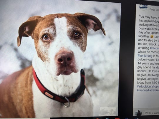 Lordeyes, a 14-year-old mixed-breed dog, has recovered from injuries sustained when he and his owner were hit by a car on North Avenue in Burlington in December 2018. He is up for adoption, the Humane Society of Chittenden County announced on Friday, Jan. 11, 2019.