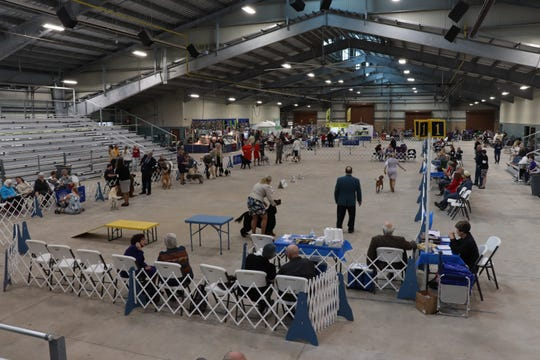 More than 500 breeds of dog will be competing for best in show at the Corpus Christi Kennel Club's 75th annual Dog Show in Sinton.