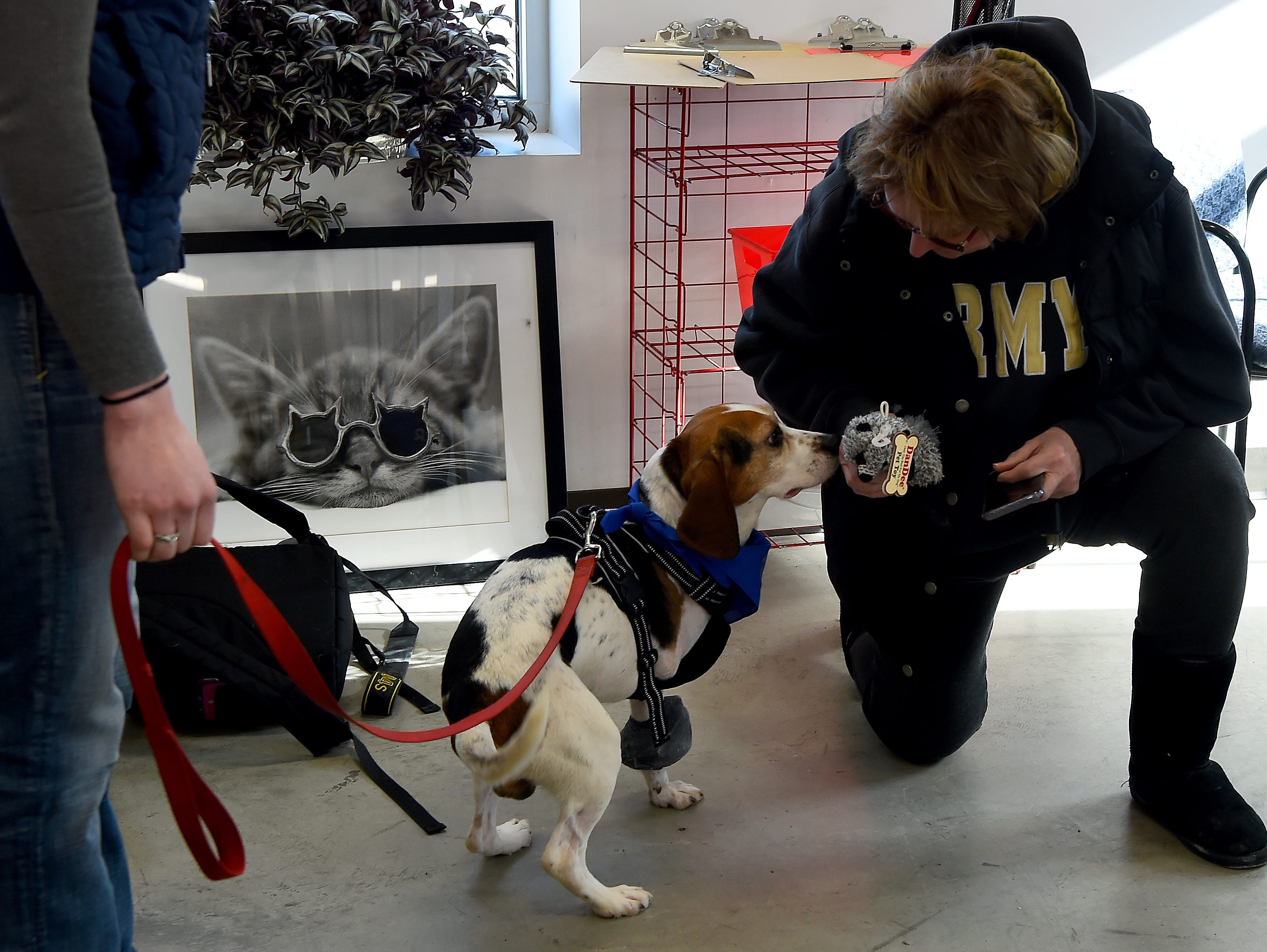 Trooper, one of two beagles thrown from a vehicle in December, with a visitor to the Broome County Humane Society. Trooper had to have one leg amputated due to the injury he sustained but is recovering well. January 11, 2019.