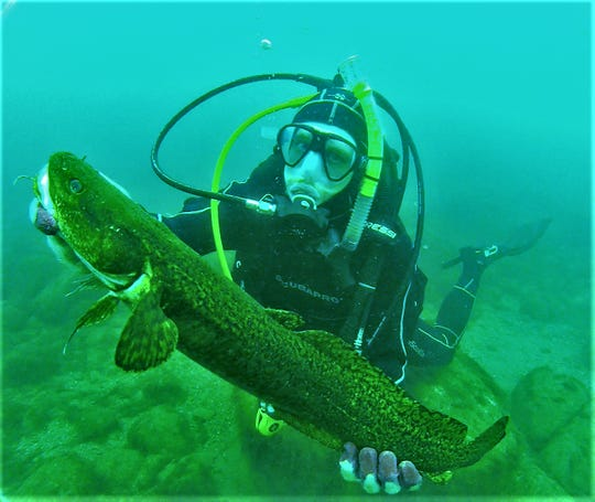 Eric Geisthardt, then a graduate student at the UWM School of Freshwater Sciences, holds a burbot during an August, 2017 dive on Green Can Reef in Lake Michigan near Milwaukee, Wisconsin.