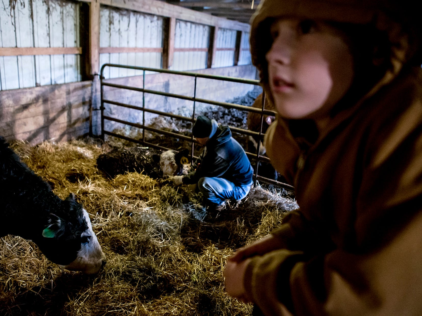 Bryce hangs out in the cow barn as his father bottle feeds a sick baby calf. This calf is slowly getting stronger and eating more as the days go by.