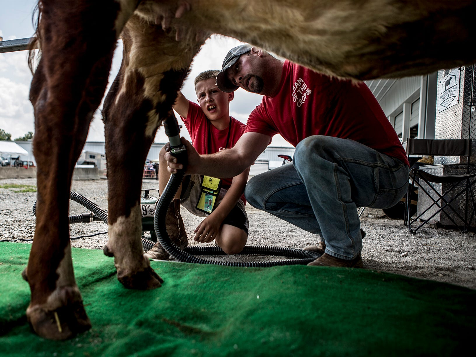 Andy helps his son, Bryce, dry his heifer, Racheal before showing at the Hartford Fair.