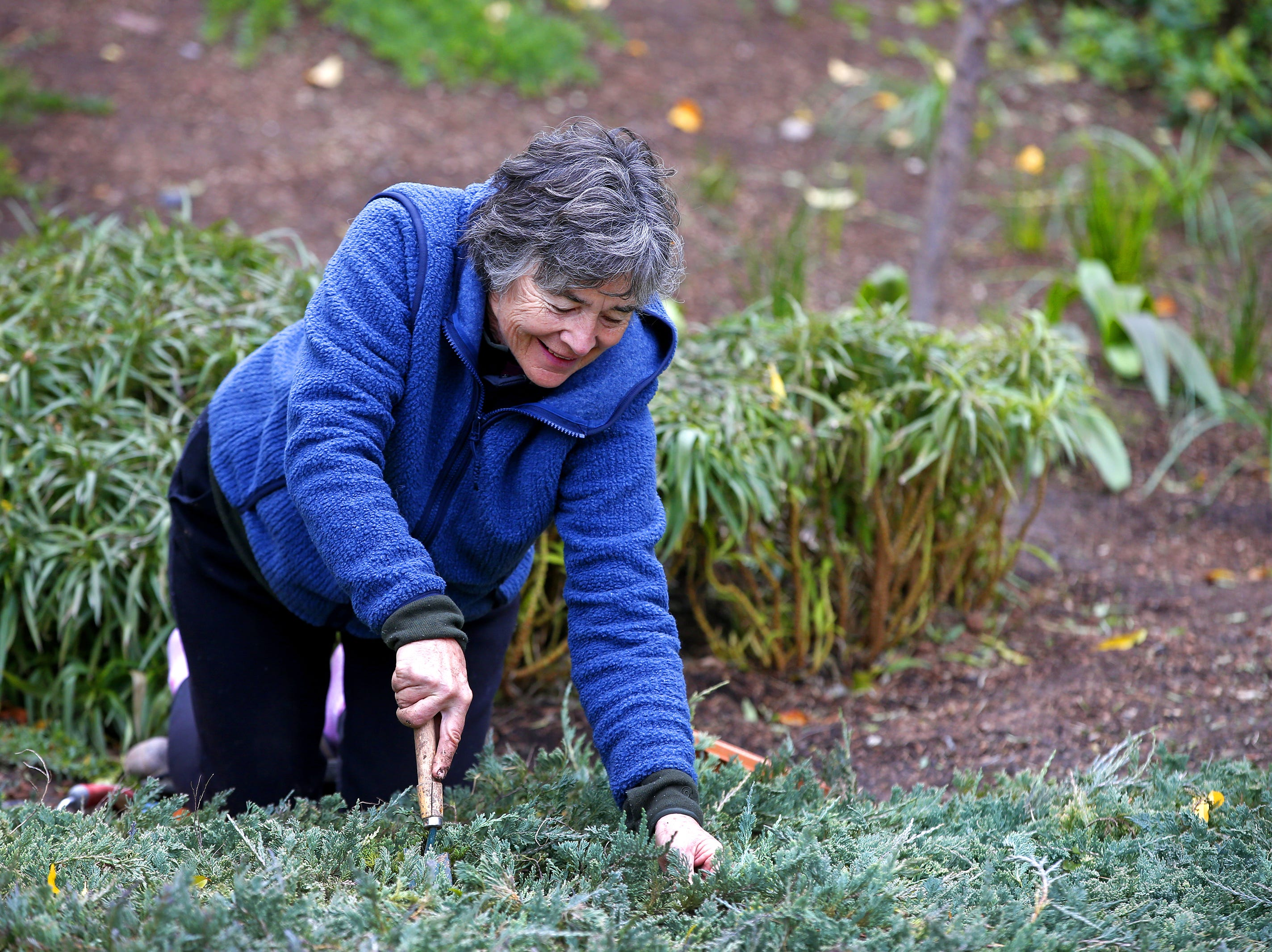 Volunteer, Winnie Woodford, pulls weeds at the Japanese Friendship Garden in Phoenix on January 10, 2019.