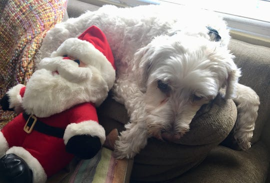 The dog has taken to napping with the stuffed Santa perched on the throw pillows on the couch. (It's kind of adorable.)