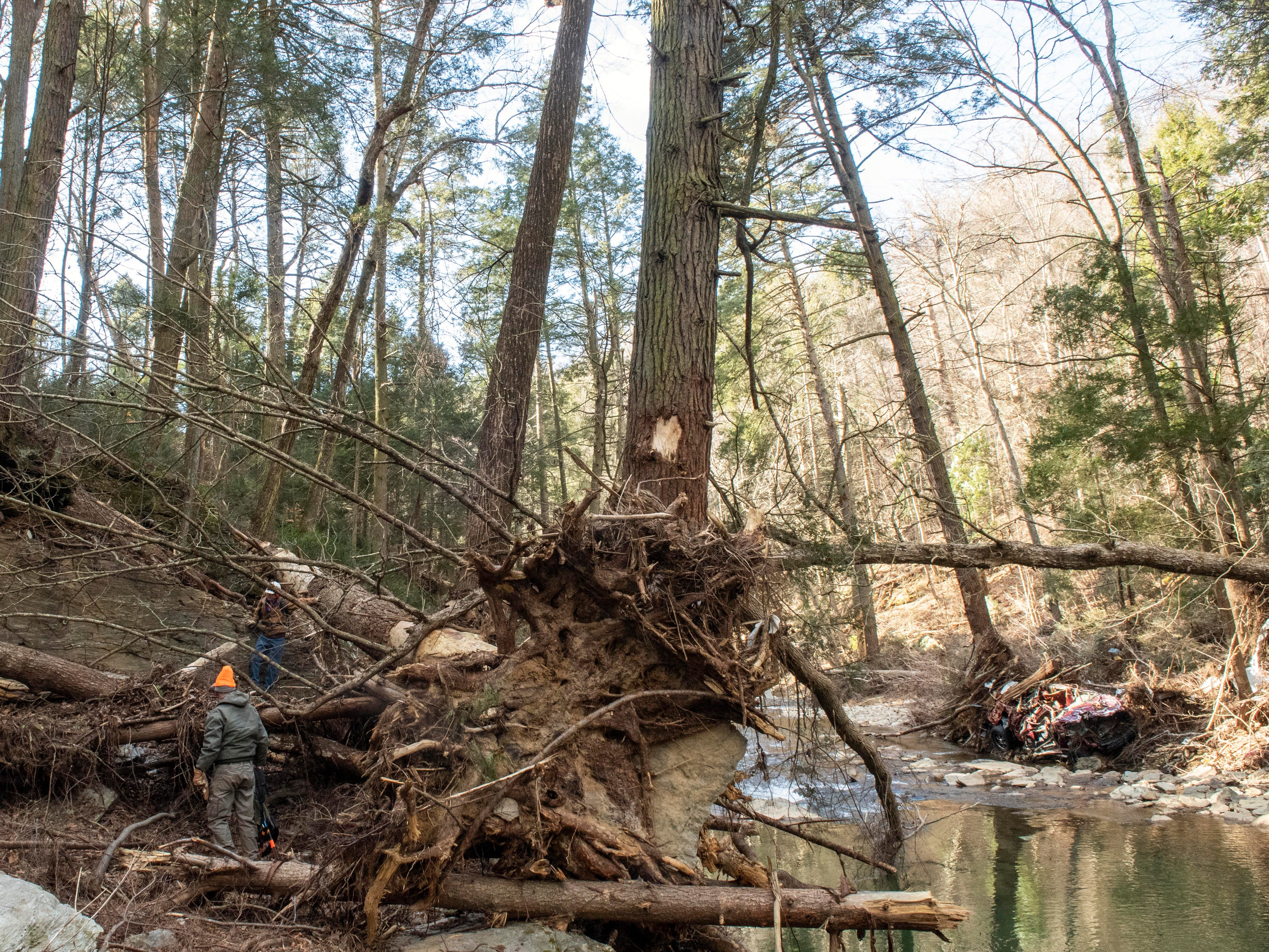 Volunteers show the scale of a downed tree, sitting across from a crumpled-up Ford truck (right), Thursday, Jan. 10, 2019. Flooding that ravaged many parts of York County in Aug. 2018 swept debris into Otter Creek, in Airville.