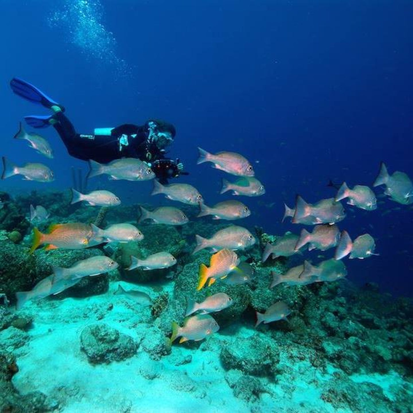 Island-wide, snorkelers can wade into the reef from the shoreline in front of many of the hotels to see a fireworks display of underwater color.