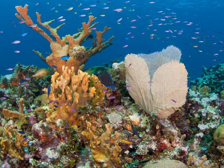 Cheeseburger Reef – 150 yards offshore from the north edge of George Town in Grand Cayman – is teeming with sea turtles, snapper and butterfly fish swimming in 10 feet of water close to shore.