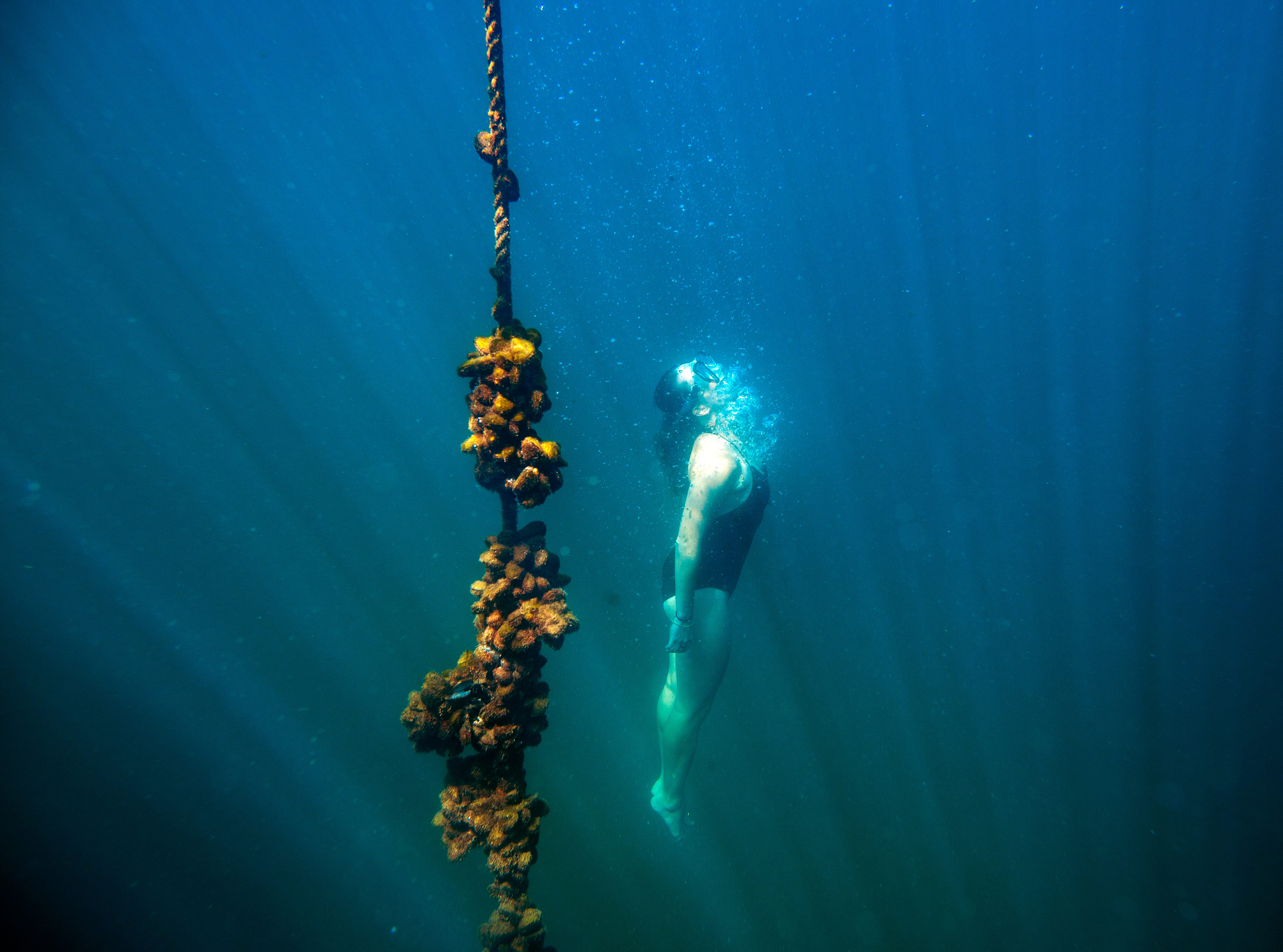A snorkeler dives to identify species during a marine biology survey in the Indian Ocean in False Bay. Overall, the 20 warmest years on record have been in the past 22 years, with the top four in the past four years, according to the WMO.