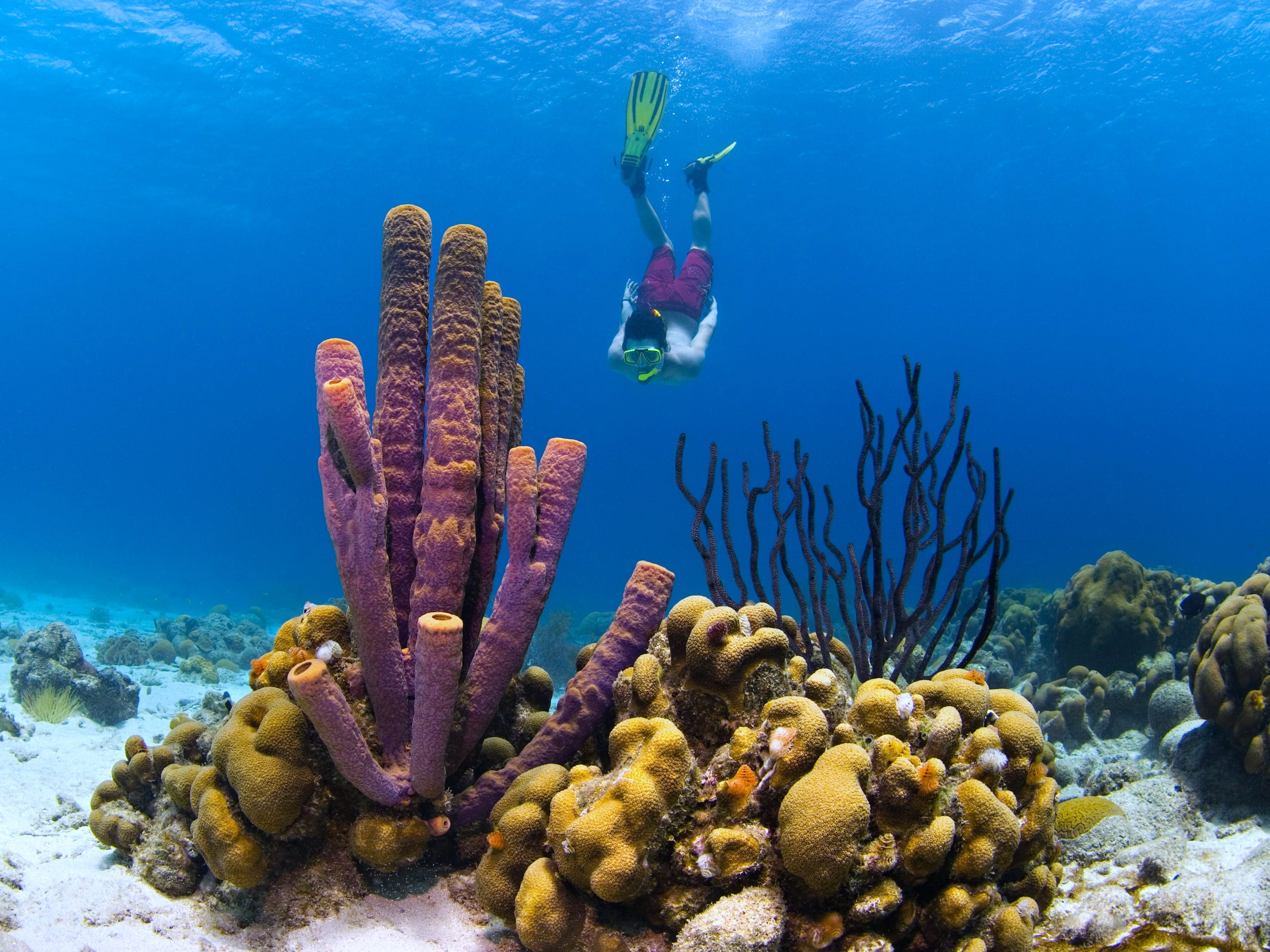 For the more adventurous, swim 10 minutes out to the reef and you'll meet up with purple coral sandwiched between maize-colored plants, teensy striped fish and friendly eagle rays.