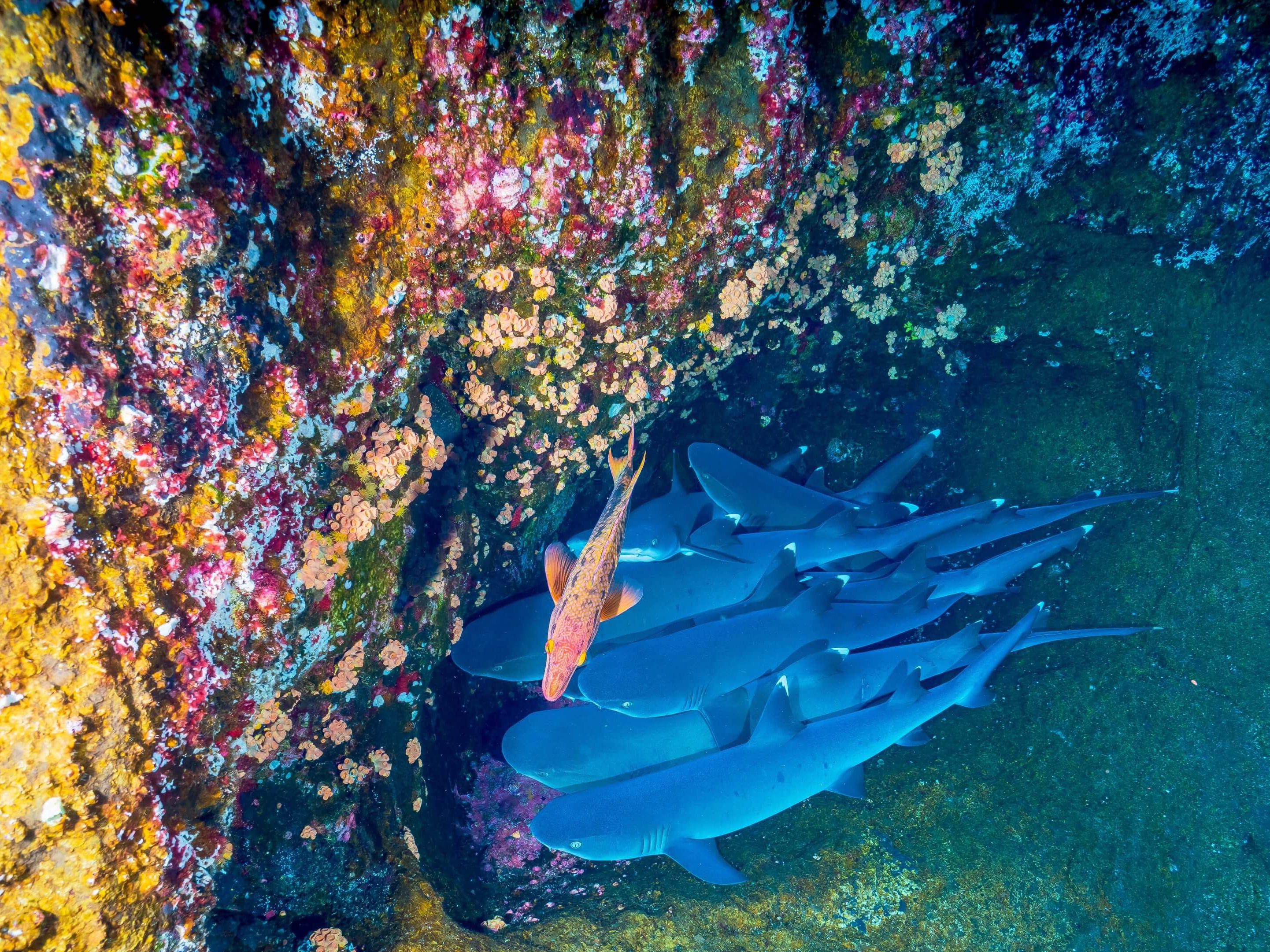 Montego Bay Marine Park in Jamaica is home to spectacular schools of colorful fish and coral.