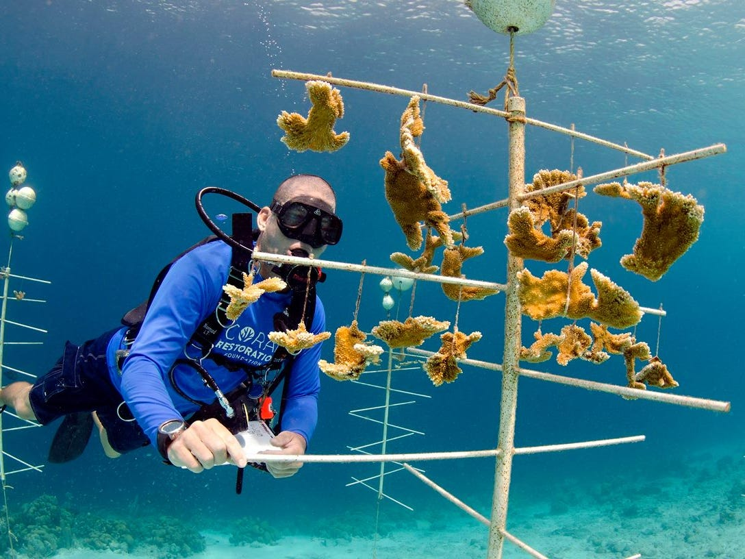 An impressive 9,000 coral fragments are growing in nurseries and over 8,000 have been transplanted.